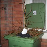 Tree in bin
