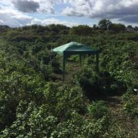 Cannabis forest with gazebo